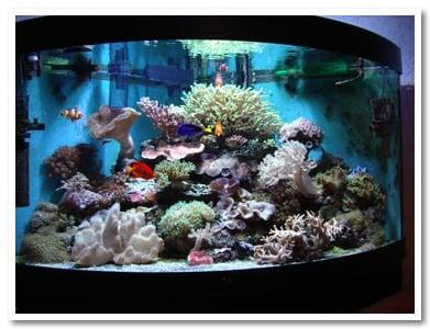 Acquario boccia surreale per pesci rossi bubble tank for Pesci per acquario piccolo