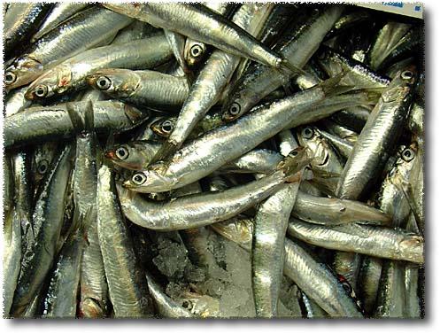 Odore di pesce sulle mani consiglio