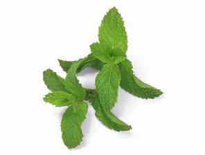 Tisana di tè verde per il morbo di Alzheimer
