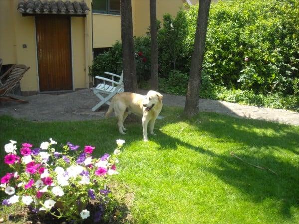 Antipulci per cani - Bagno cane dopo antipulci ...