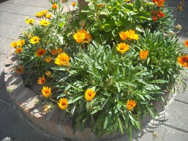 Aiuola fiorita fai da te