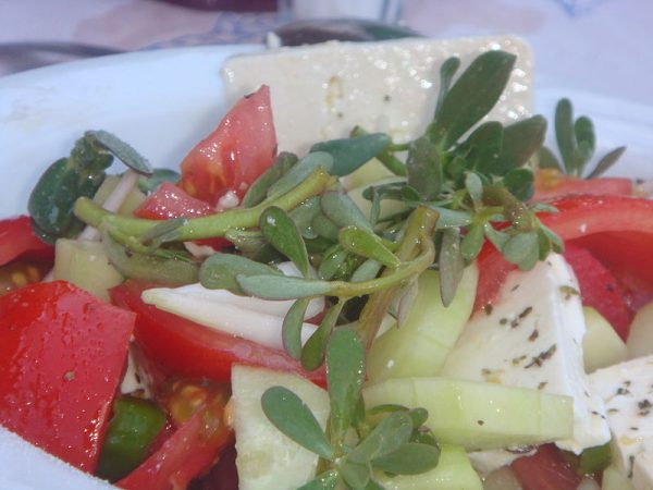 insalata-erba-portulaca