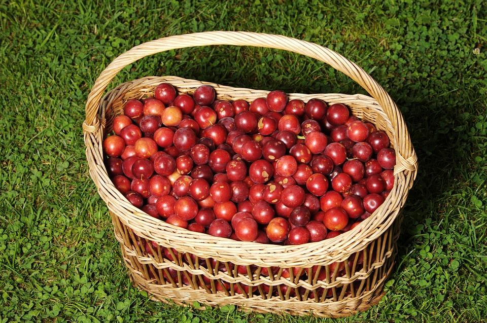 Cestoper-frutta