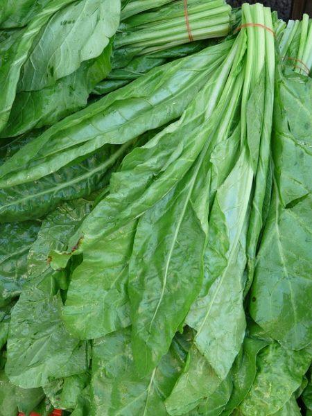 spinaci-raccolta