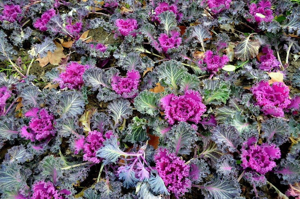 Aiuola invernale giardino for Piante da aiuola