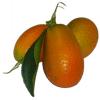 marmellata-mandarini-cinesi