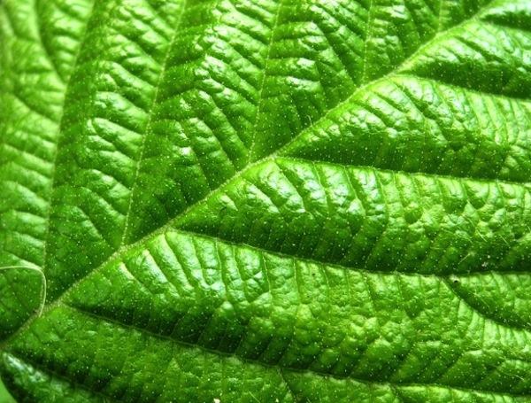 Acceleratori di fotosintesi