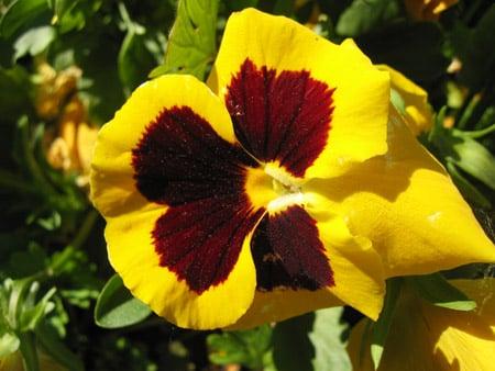 Semine di Agosto fiori e piante