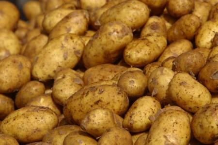 semina-patate