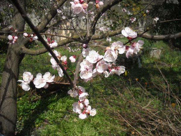 foto-primavera-giardino