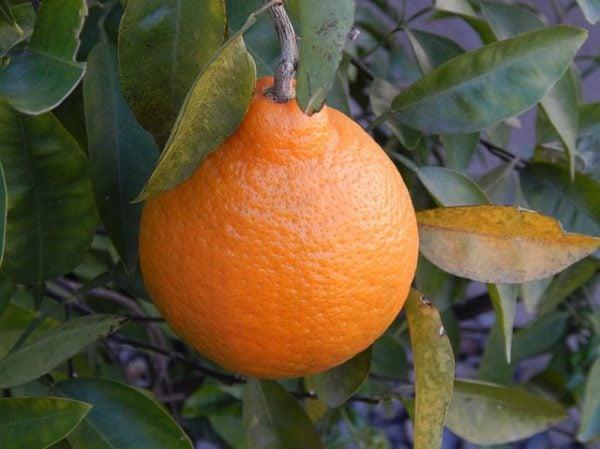 Vino all'arancia