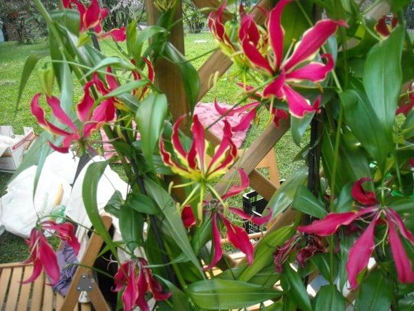 Piante rampicanti da giardino for Piante rampicanti sempreverdi