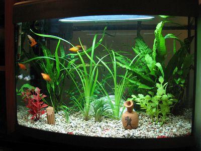Pesci d 39 acquario tropicale come comporre il vostro acquario for Acqua acquario