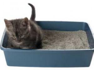 Eliminare cattivi odori dalla lettiera del gatto