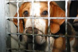 Canili Lager, 365 cani cercano casa