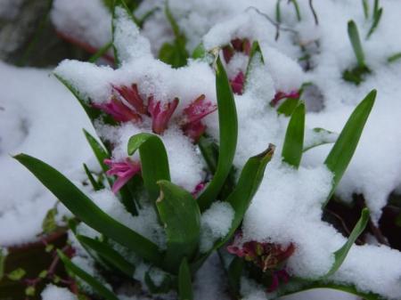 Tappeto erboso e neve consigli