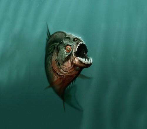 Acquario Piranha allestimento, i primi passi