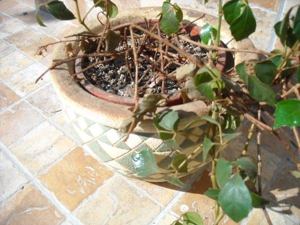 rinvaso-piante-appartamento