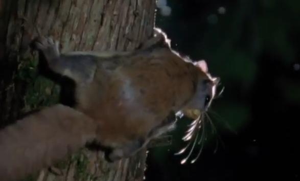 scoiattolo-volante-albero