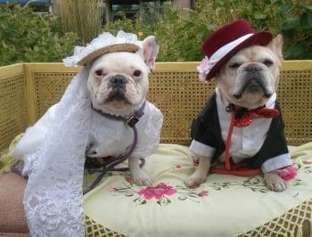 Matrimonio tra animali