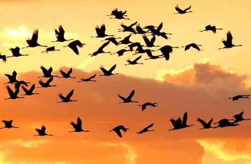 Uccelli: un modello per studiarne la migrazione