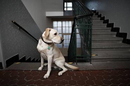 animali-condominio-regole-nuova-legge