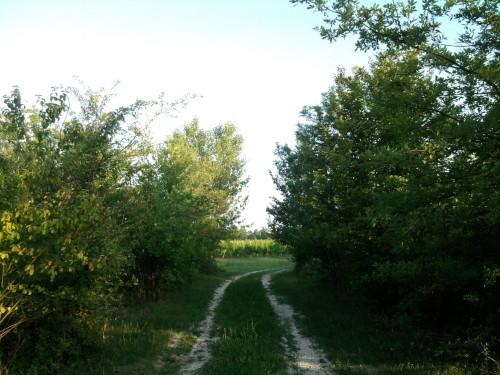 Come tutelare la biodiversità del territorio