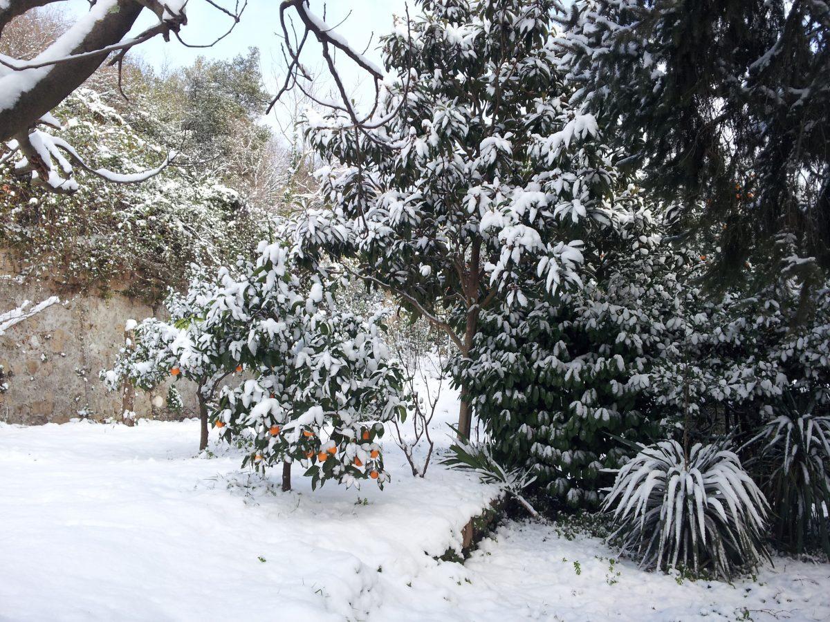 sempreverdi-neve