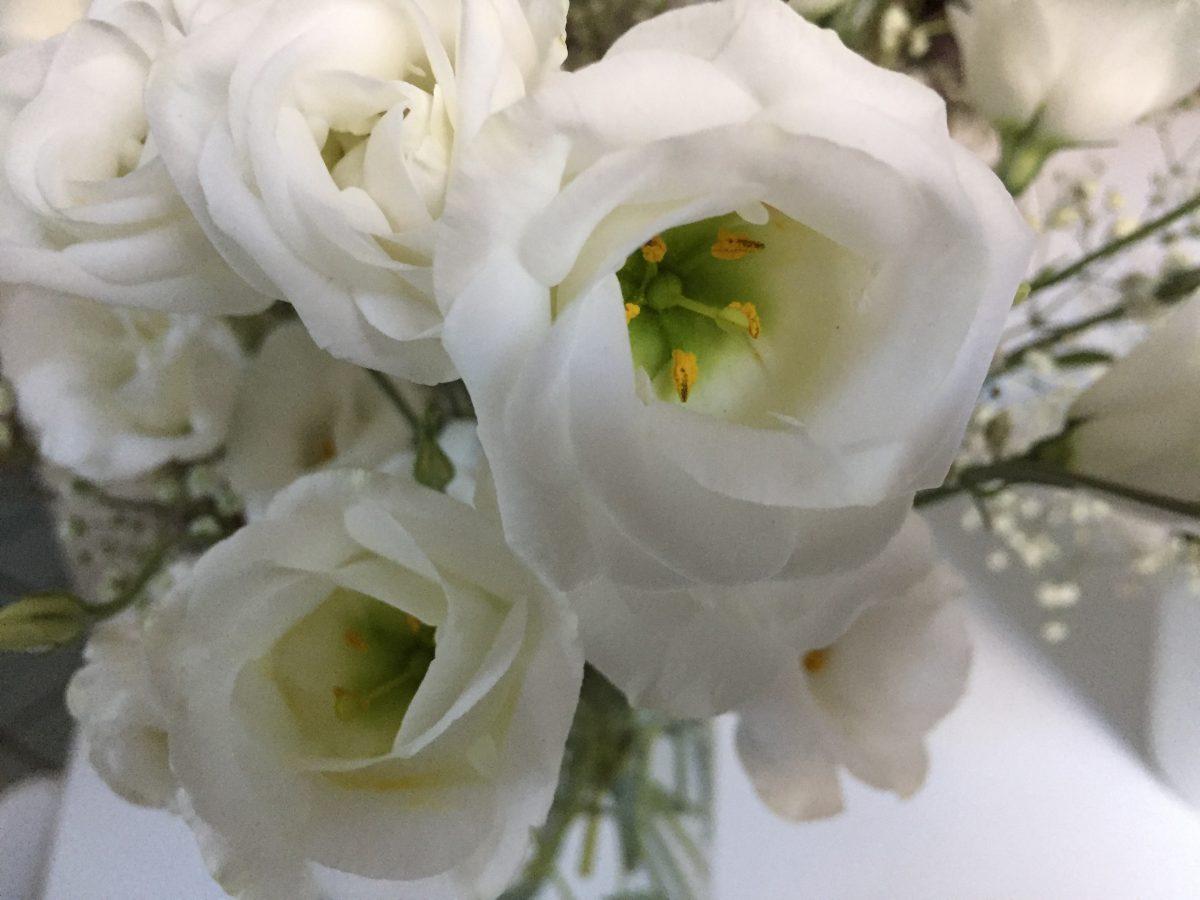 lisiantus-fiori-bianchi