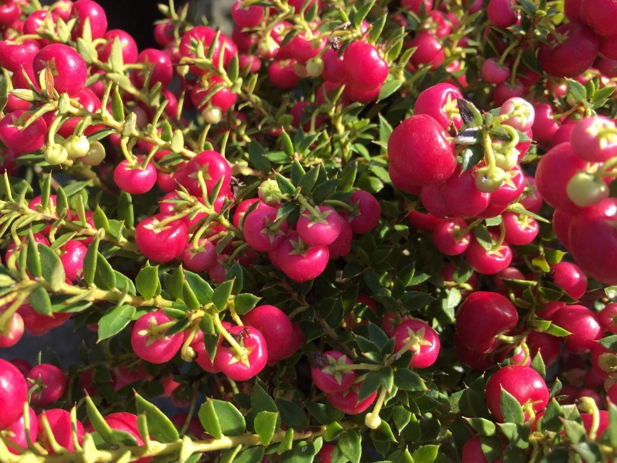Pernezia-linguaggio-piante