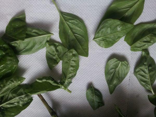 basilico-foglie-pulizia