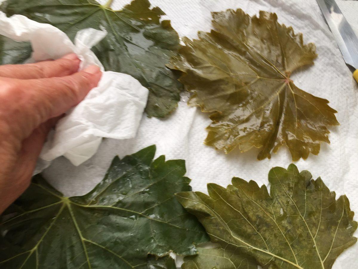 foglie.vite-asciugatura