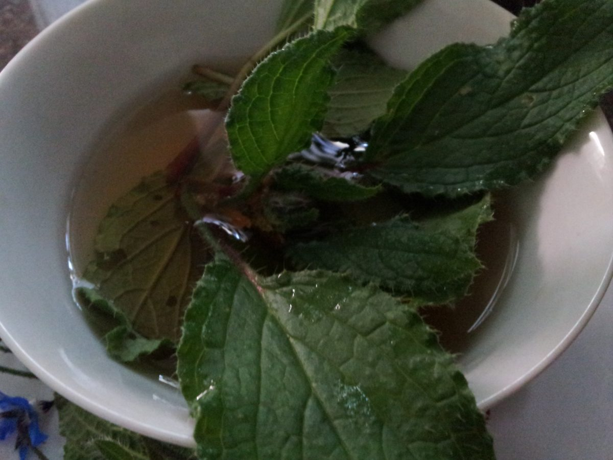 Borragine-decotto-foglie