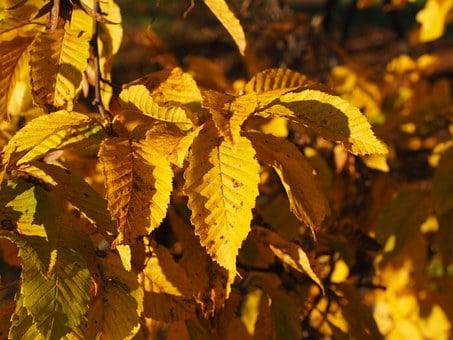 foglie-fusaggine