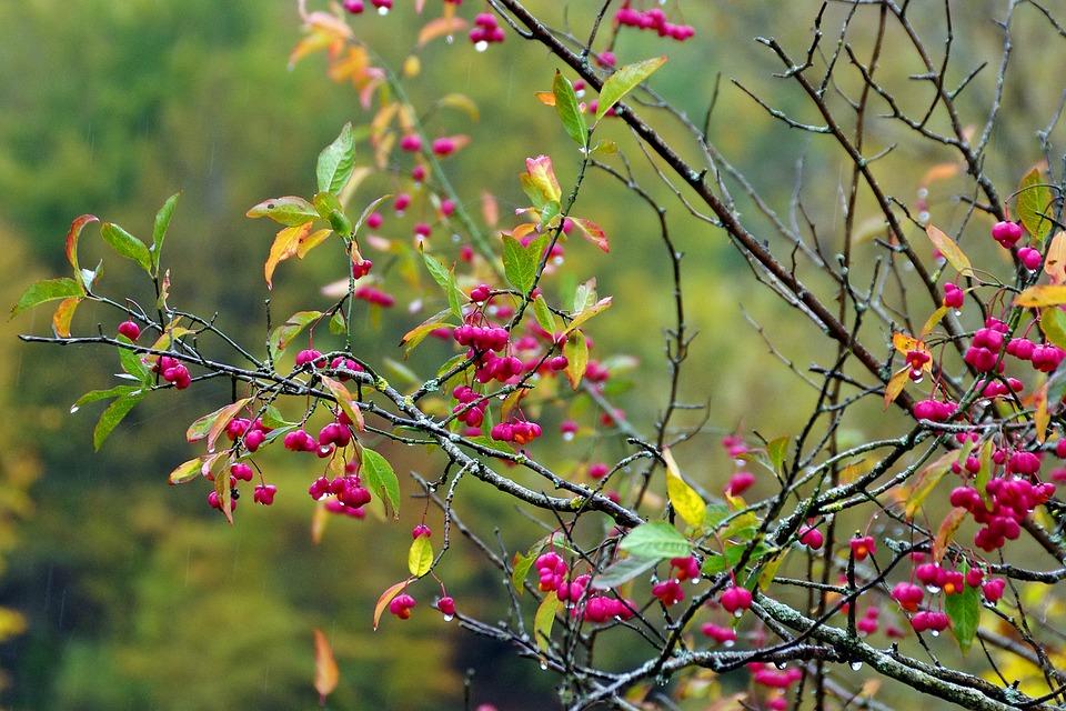 fusaggine-frutti-velenosi