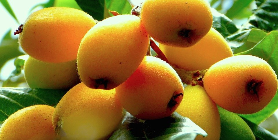 Nespole-frutti