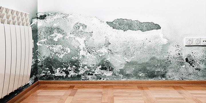 come-eliminare-muffa-pareti