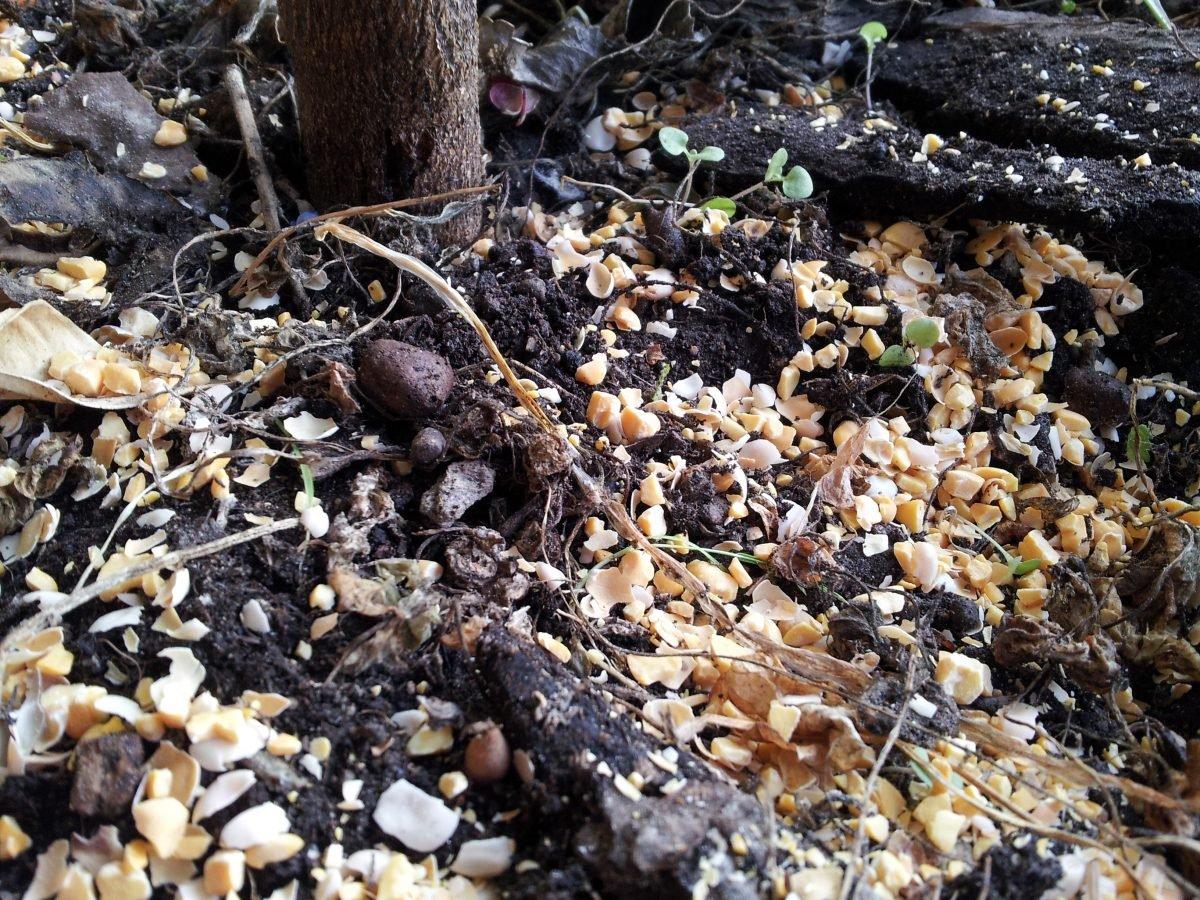 lupini macinati-concime vegetale