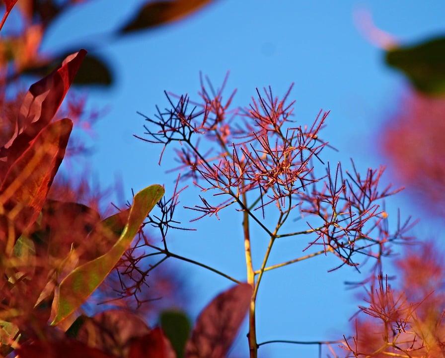 Cotino-autunno