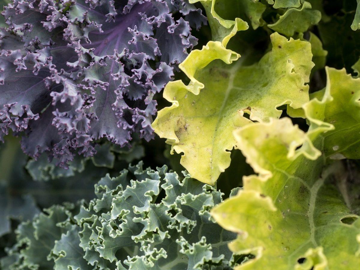 Kale-varietà