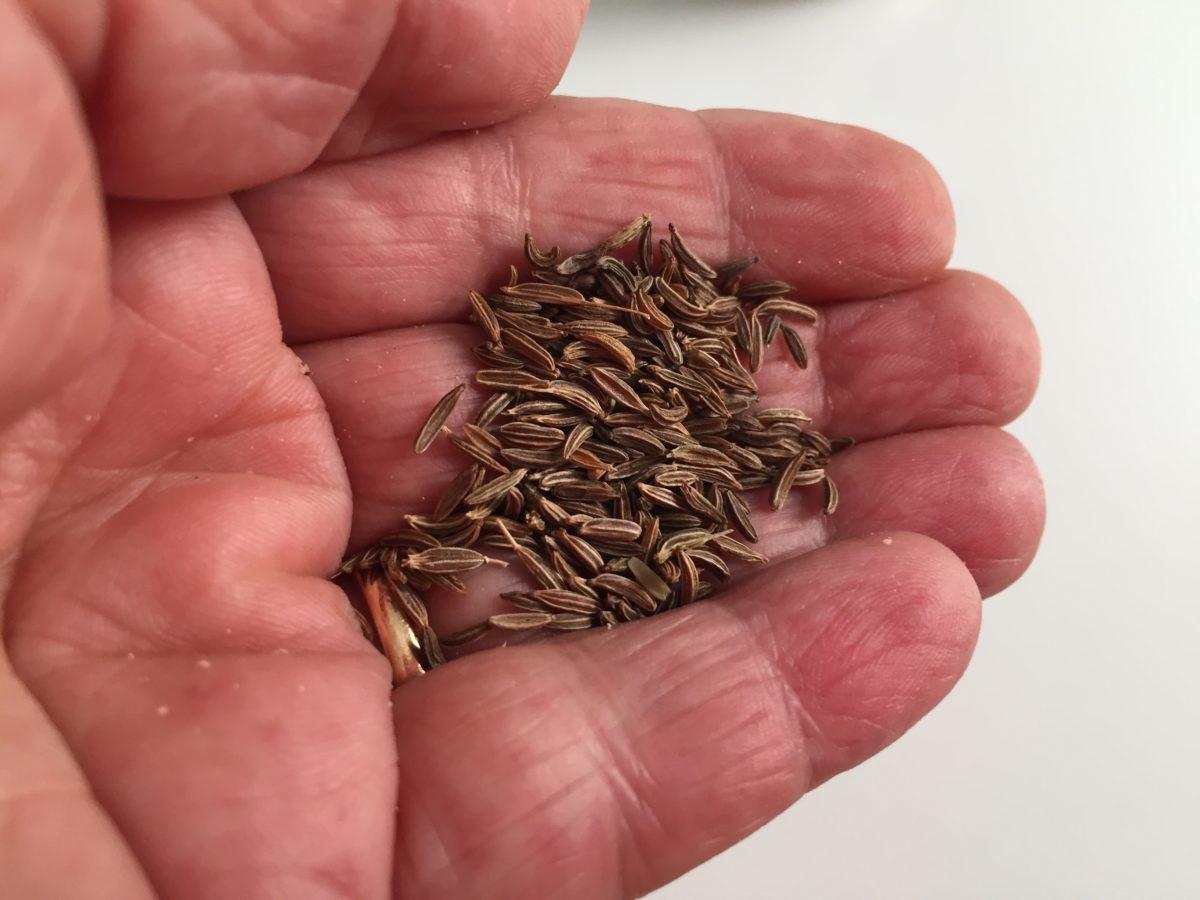 Cumino-semina