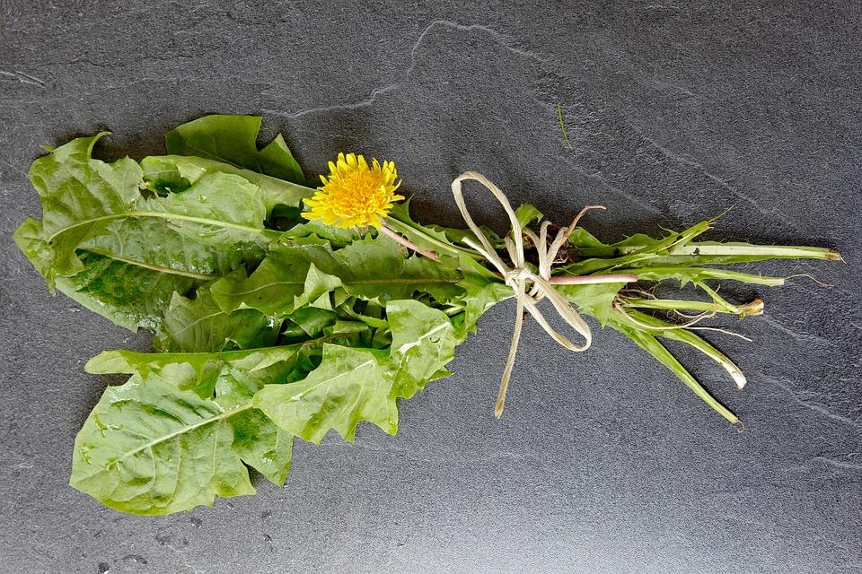 Piattello-Hypochaeris radicata-usi