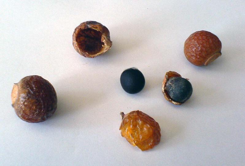 Noci saponarie- frutti Sapindus