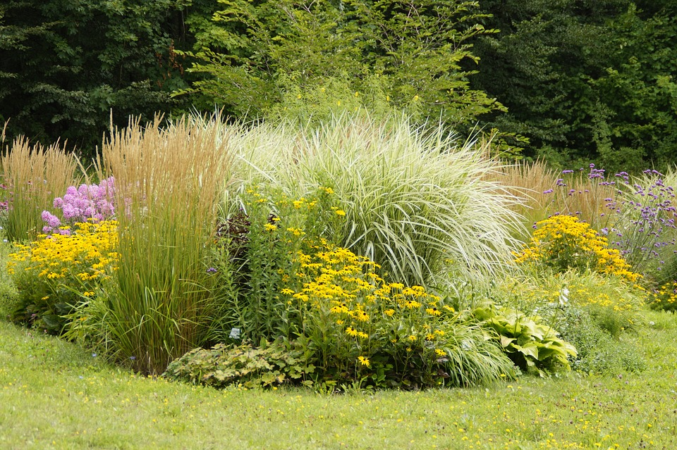 Carex-Carice-Coltivazione