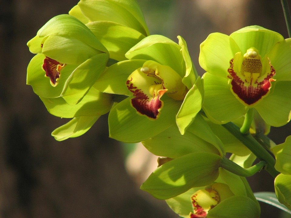 Orchidea Nongke Shenzhen