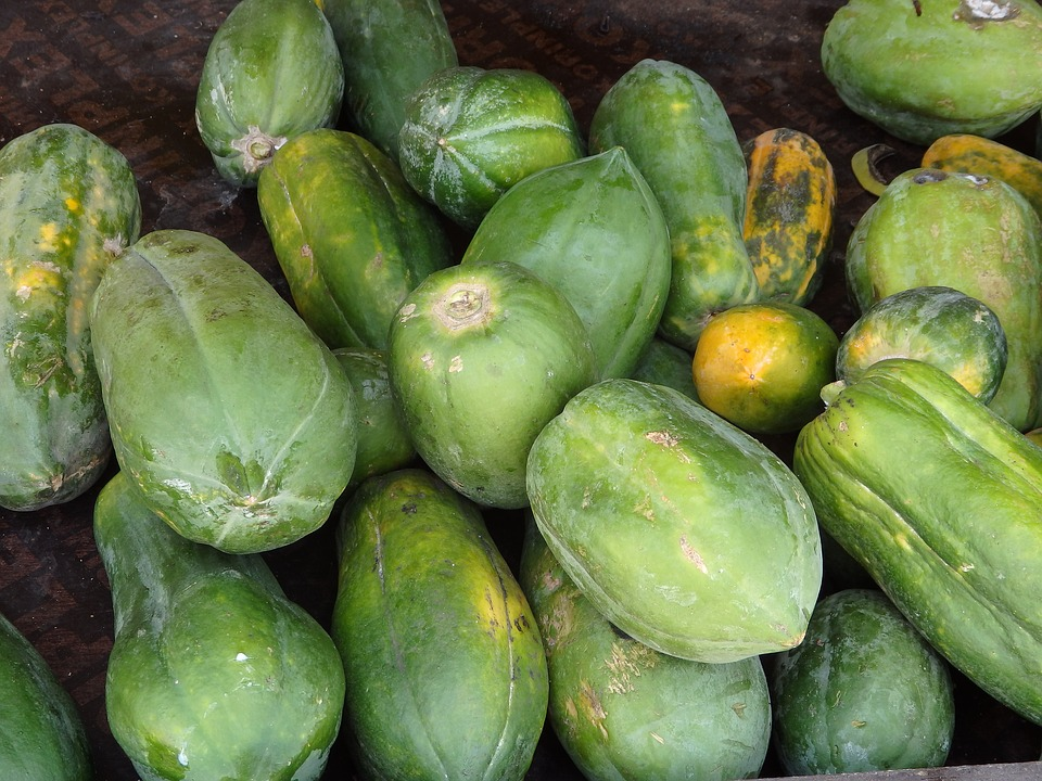 Babaco-frutti-raccolta