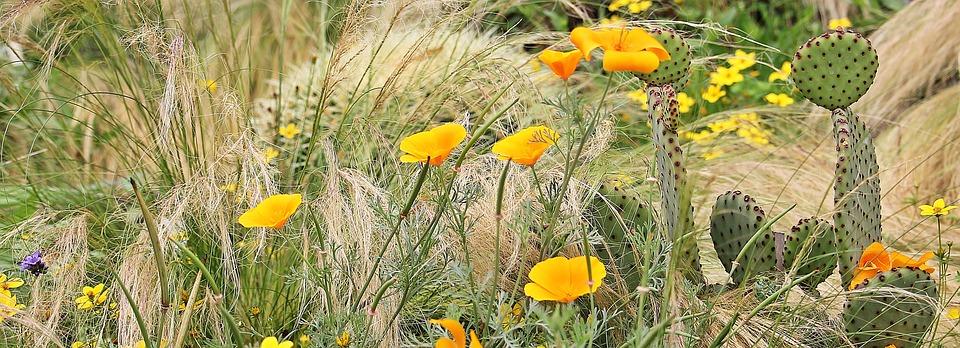Calamagrostis-abbinamenti