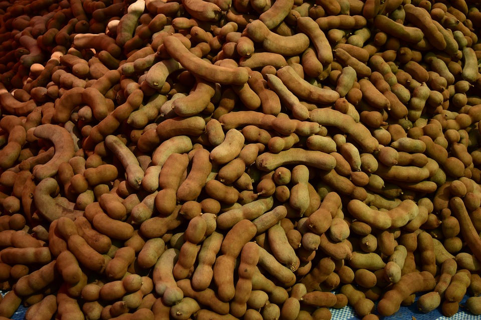 Tamarindo-raccolta frutti