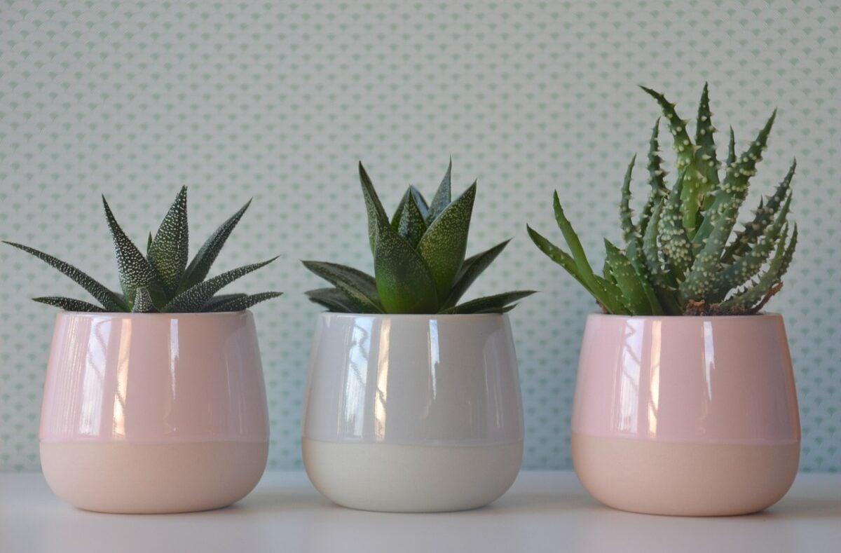 piante-adatte-afa-1