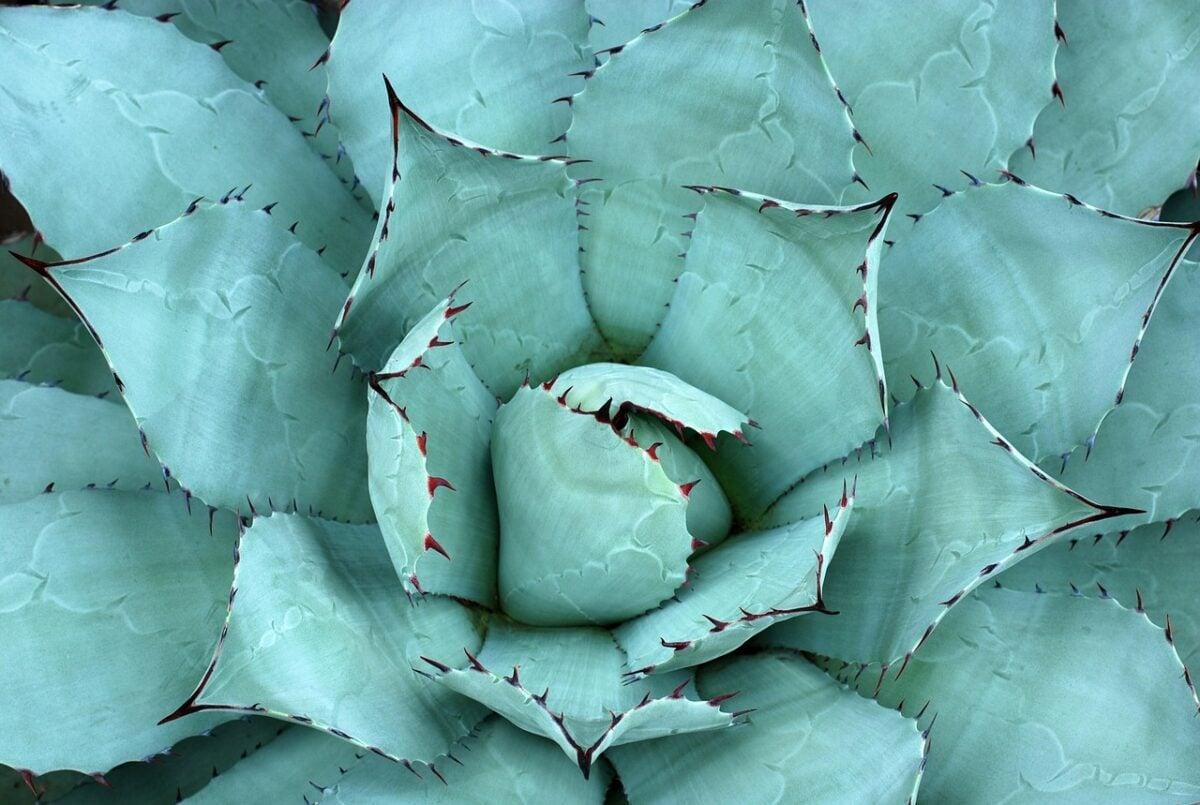 piante-adatte-afa-2